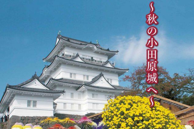 第68回小田原城菊花展 11/3(土)~15(木)