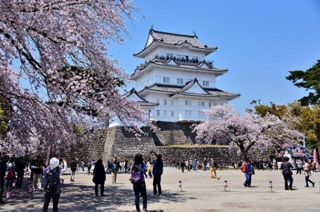 小田原城本丸広場 こたつdeお花見 3/23(土) ~ 4/7(日)
